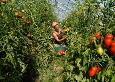 Aide alimentaire et producteurs locaux