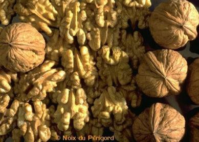 Recettes aux cerneaux de noix