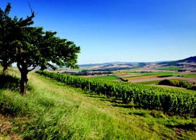 Les vins volcaniques d'Auvergne