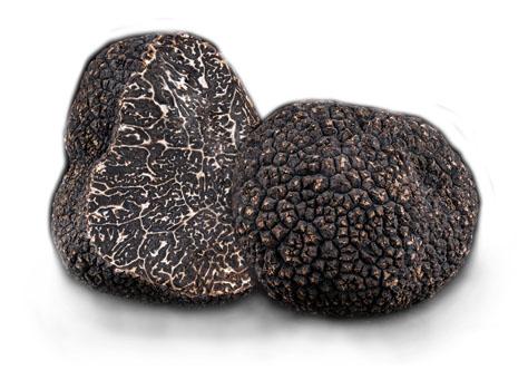 Plantin : L'Art de la truffe à notre service !