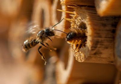 BeeHome: une belle initiative…